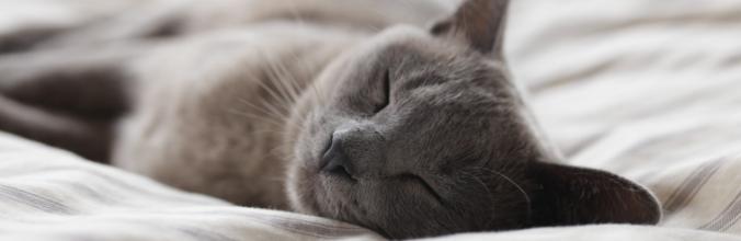 Comment améliorer la qualité de votre sommeil